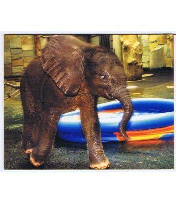 moneda Austria 5 Euros 2002 (nueve esquinas) Zoo. Elefante  - 4